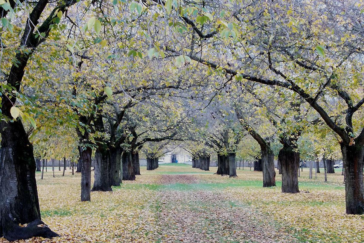 Obstgarten im Schwetzinger Schlossgarten im Herbst; Foto: Staatliche Schlösser und Gärten Baden-Württemberg, Gerhard Raab