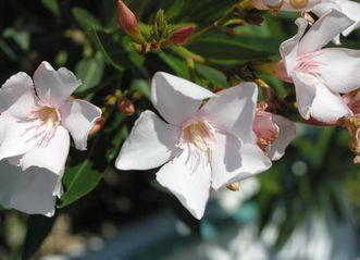Blüten im Schlossgarten von Schloss Schwetzingen; Foto: Staatliche Schlösser und Gärten Baden-Württemberg, Julia Haseloff