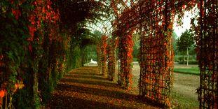 Treillage im Schlossgarten von Schloss Schwetzingen