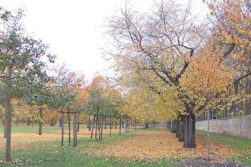Herbstlicher Zierkirschgarten im Schwetzinger Schlossgarten; Foto: Staatliche Schlösser und Gärten Baden-Württemberg, Gerhard Raab