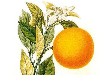 Zeichnung Orange 1872