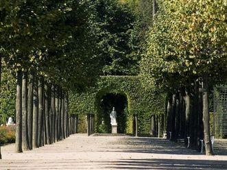 Allee im Schlossgarten von Schloss Schwetzingen
