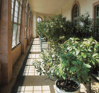 Pflanzen in der Neuen Orangerie von Schloss Schwetzingen; Foto: Staatsanzeiger für Baden-Württemberg, Petra Schaffrodt